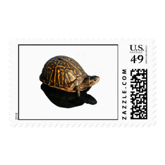 Florida Box turtle Photograph with Shadow Cutout Stamps