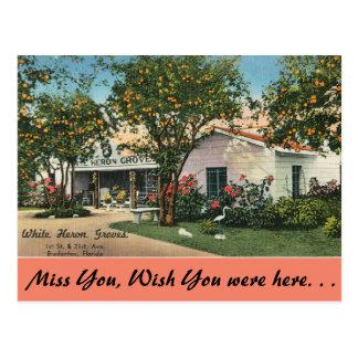 Florida, Bradenton, White Heron Groves Postcard