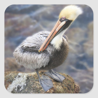 Florida Brown Pelican Standing on Jetty Rock Square Sticker
