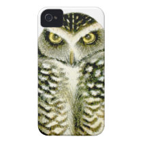 Florida Burrowing Owl iPhone 4 Cover