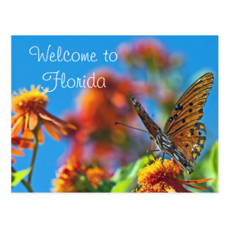 Florida Butterly Postcard