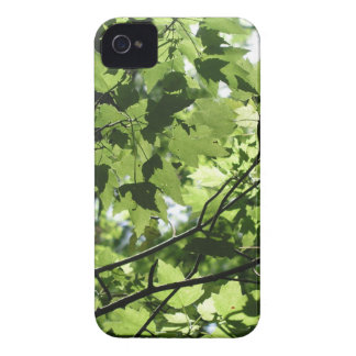 Florida Canopy iPhone 4 Cover