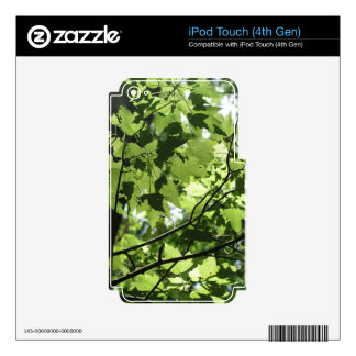 Florida Canopy Skin For iPod Touch 4G