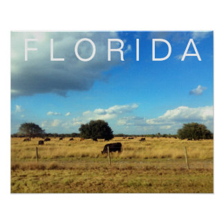 Florida Cattle Poster