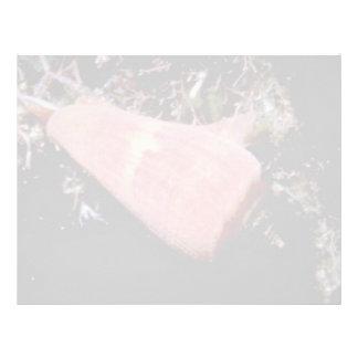 Florida cone (Conus floidanus) Shell Letterhead Design