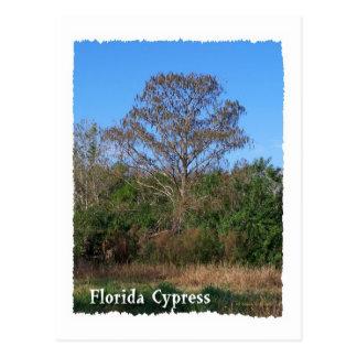 Florida Cypress Swamp Vertical Postcard