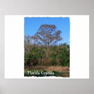 Florida Cypress Swamp Vertical Poster