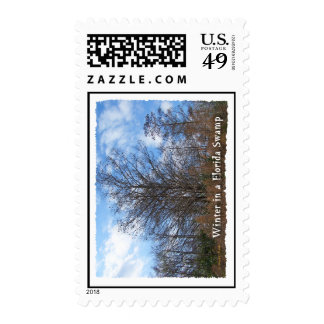 Florida Cypress Swamp Winter scene Postage Stamp