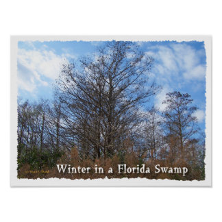 Florida Cypress Swamp Winter scene Print