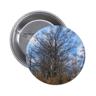 Florida Cypress winter scene swamp blue sky Button