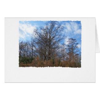 Florida Cypress winter scene swamp blue sky Cards