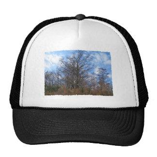 Florida Cypress winter scene swamp blue sky Mesh Hats