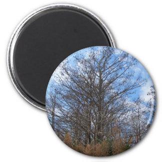 Florida Cypress winter scene swamp blue sky Fridge Magnets