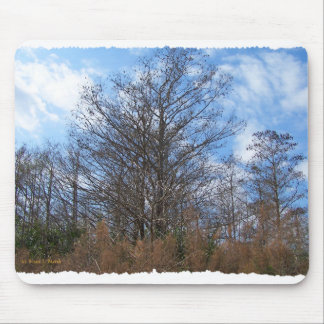 Florida Cypress winter scene swamp blue sky Mousepad