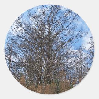 Florida Cypress winter scene swamp blue sky Round Sticker