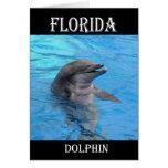Florida Dolphin Card