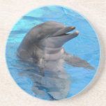 Florida Dolphin Coaster