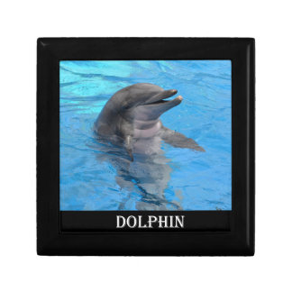 Florida Dolphin Gift Box