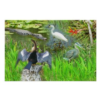 Florida Everglades National Park wildlife Poster