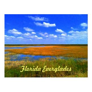 Florida Everglades Post Card
