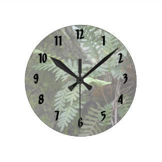 florida ferns and moss  oak tree nature landscape round clock