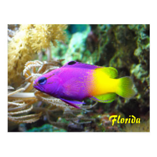 Florida fish postcard