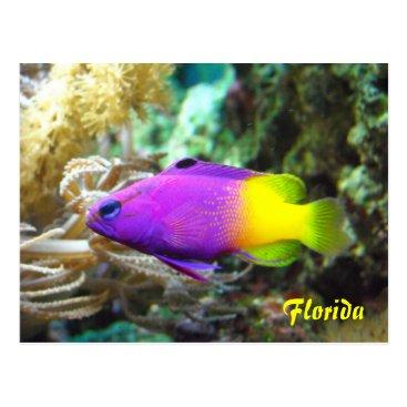 Beach Themed Florida fish postcard