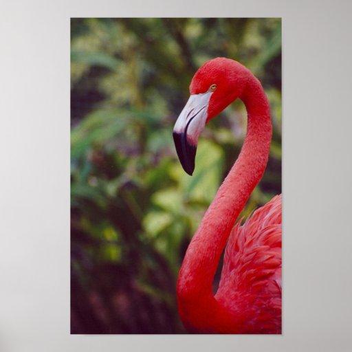 Florida Flamingo 2 Poster