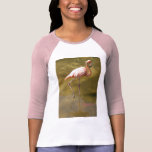 Florida Flamingo in Water Tshirt