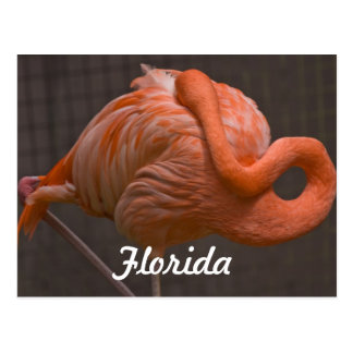 Florida Flamingo Postcard