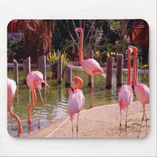 Florida Flamingos Mouse Mats