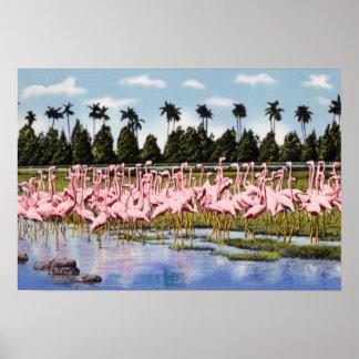 Florida Flock of Coral Flamingos Posters