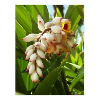 Florida Flower Postcard