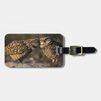 Florida, Fort Myers. Burrowing Owl pair bonding Bag Tag