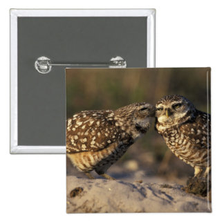 Florida, Fort Myers. Burrowing Owl pair bonding 2 Inch Square Button