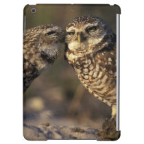 Florida, Fort Myers. Burrowing Owl pair bonding iPad Air Covers