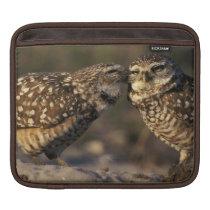 Florida, Fort Myers. Burrowing Owl pair bonding iPad Sleeve