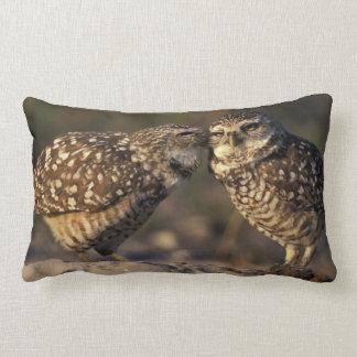 Florida, Fort Myers. Burrowing Owl pair bonding Lumbar Pillow
