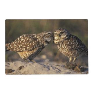 Florida, Fort Myers. Burrowing Owl pair bonding Placemat