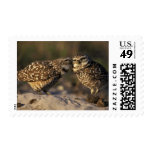 Florida, Fort Myers. Burrowing Owl pair bonding Postage