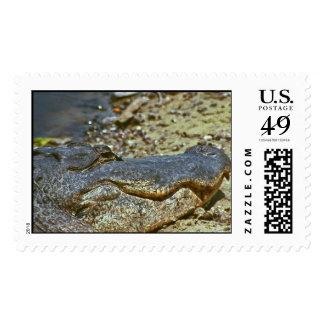 Florida Gator Stamp