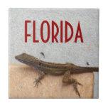 Florida Geko Coaster Tile