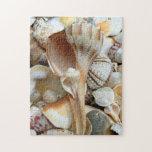 Florida Gulf Coast Lighting Whelk Seashells Puzzle