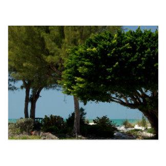 Florida Gulf Coast Postcard