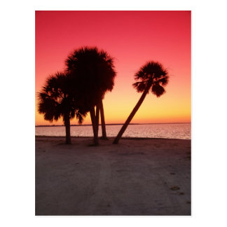 Florida Gulf Sunset Postcard