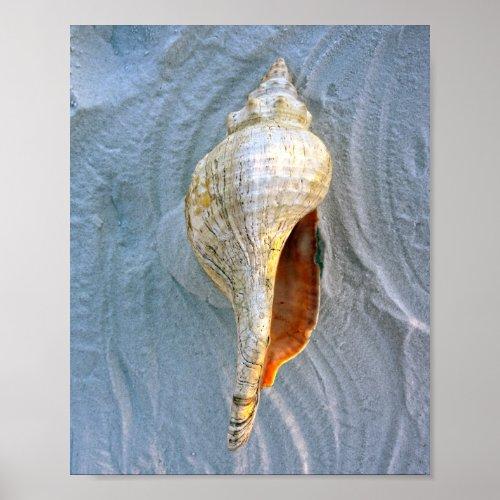 Florida Horse Conch Poster