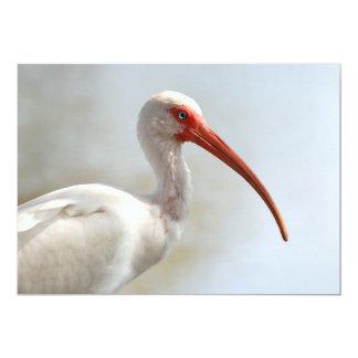 Florida Ibis -Cool Water Bird Card