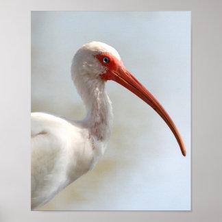 Florida Ibis -Cool Water Bird Posters