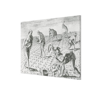 Florida Indians planting maize Stretched Canvas Prints