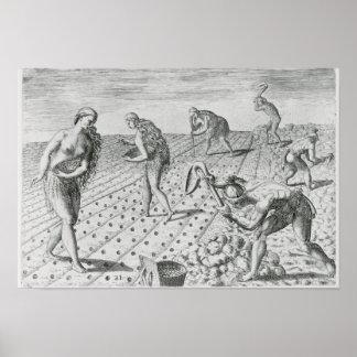 Florida Indians planting maize Poster